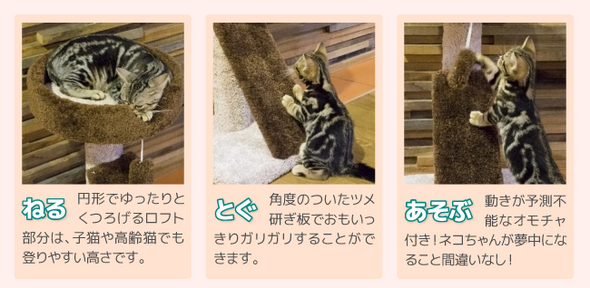 Funny Cat ロフトスクラッチ